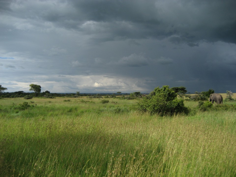 Male elephant and approaching storm