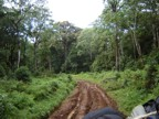 The road through the jungle to the forest gate was really bad -- 4WD and muddy