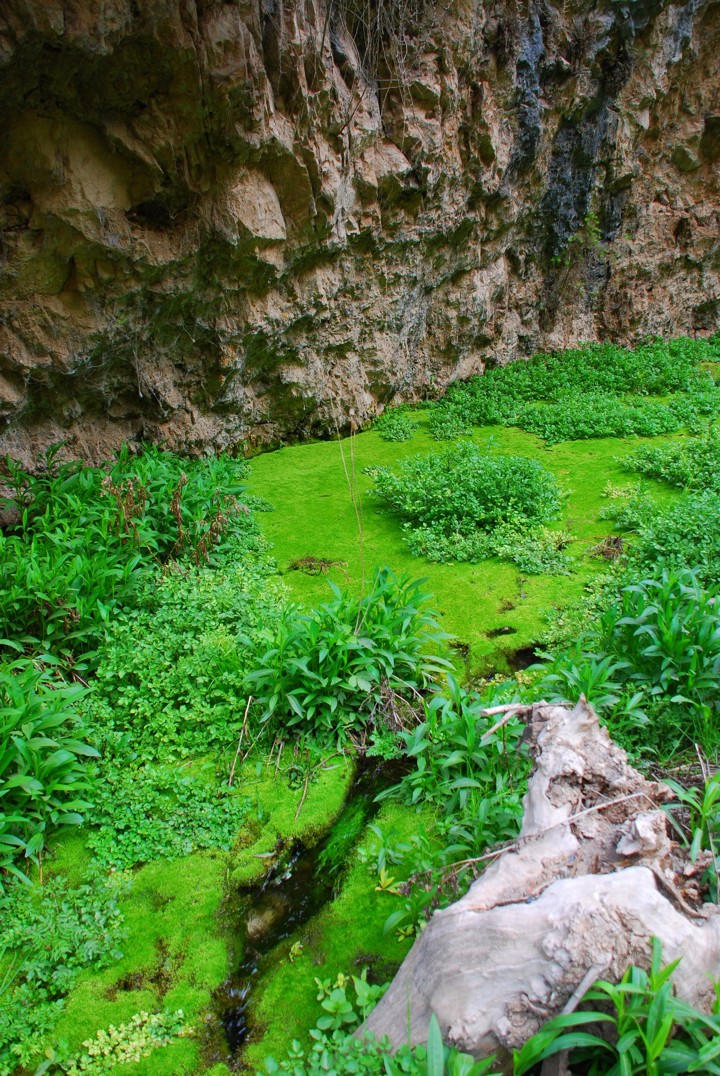 Mossy creek in the canyon