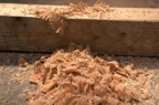 Pile of sawdust generated during the raising