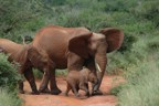 Red elephants (actually, just normal elephants covered in red soil) and a small baby elephant